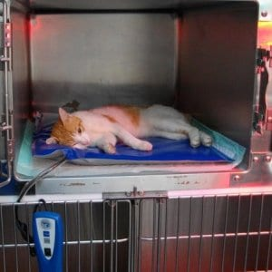 Veterinary Heating Systems