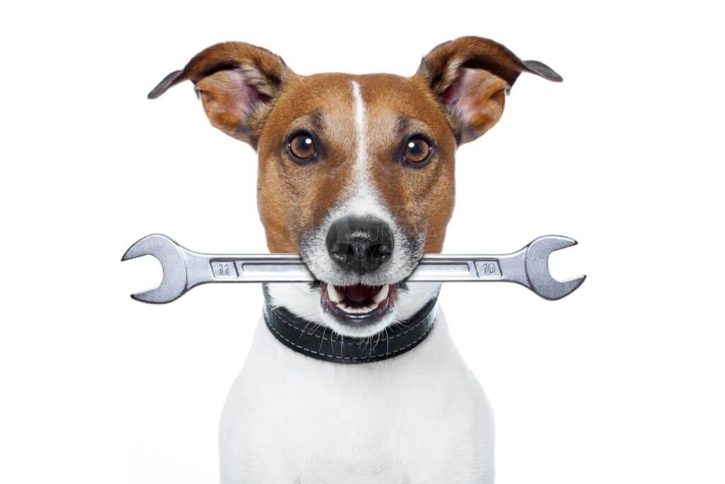 Servicing Dog